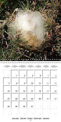 Caterpillars Natural Wonders (Wall Calendar 2019 300 × 300 mm Square) - Produktdetailbild 1