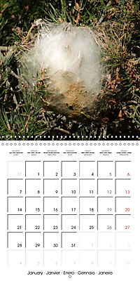 Caterpillars Natural Wonders (Wall Calendar 2019 300 × 300 mm Square) - Produktdetailbild 1