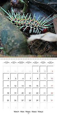 Caterpillars Natural Wonders (Wall Calendar 2019 300 × 300 mm Square) - Produktdetailbild 3