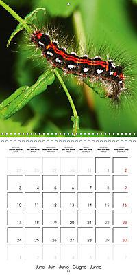 Caterpillars Natural Wonders (Wall Calendar 2019 300 × 300 mm Square) - Produktdetailbild 6