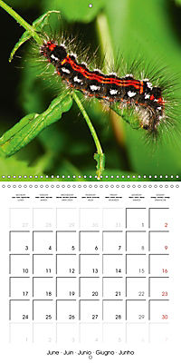 Caterpillars Natural Wonders (Wall Calendar 2019 300 × 300 mm Square) - Produktdetailbild 6
