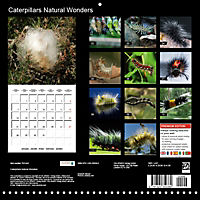 Caterpillars Natural Wonders (Wall Calendar 2019 300 × 300 mm Square) - Produktdetailbild 13