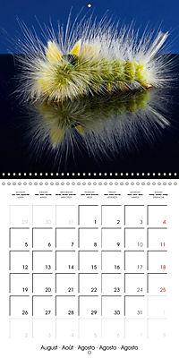 Caterpillars Natural Wonders (Wall Calendar 2019 300 × 300 mm Square) - Produktdetailbild 8