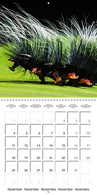 Caterpillars Natural Wonders (Wall Calendar 2019 300 × 300 mm Square) - Produktdetailbild 11