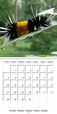 Caterpillars Natural Wonders (Wall Calendar 2019 300 × 300 mm Square) - Produktdetailbild 10
