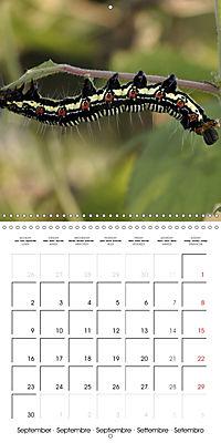 Caterpillars Natural Wonders (Wall Calendar 2019 300 × 300 mm Square) - Produktdetailbild 9