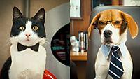 Cats & Dogs 2 - Die Rache der Kitty Kahlohr - Produktdetailbild 4