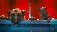 Cats & Dogs 2 - Die Rache der Kitty Kahlohr - Produktdetailbild 9