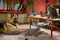 Cats & Dogs 2 - Die Rache der Kitty Kahlohr - Produktdetailbild 6