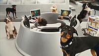 Cats & Dogs 2 - Die Rache der Kitty Kahlohr - Produktdetailbild 5