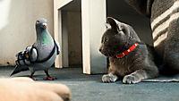 Cats & Dogs 2 - Die Rache der Kitty Kahlohr - Produktdetailbild 8