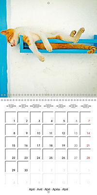 Cats in Greece (Wall Calendar 2019 300 × 300 mm Square) - Produktdetailbild 4