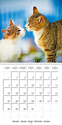 Cats in Greece (Wall Calendar 2019 300 × 300 mm Square) - Produktdetailbild 1