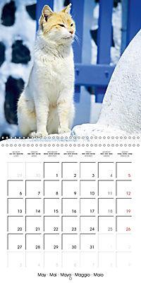 Cats in Greece (Wall Calendar 2019 300 × 300 mm Square) - Produktdetailbild 5