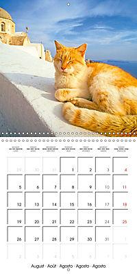 Cats in Greece (Wall Calendar 2019 300 × 300 mm Square) - Produktdetailbild 8