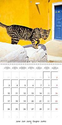 Cats in Greece (Wall Calendar 2019 300 × 300 mm Square) - Produktdetailbild 6