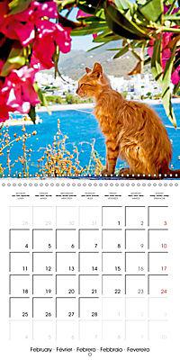 Cats in Greece (Wall Calendar 2019 300 × 300 mm Square) - Produktdetailbild 2