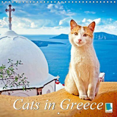 Cats in Greece (Wall Calendar 2019 300 × 300 mm Square), CALVENDO