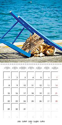 Cats in Greece (Wall Calendar 2019 300 × 300 mm Square) - Produktdetailbild 7