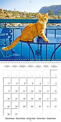 Cats in Greece (Wall Calendar 2019 300 × 300 mm Square) - Produktdetailbild 12
