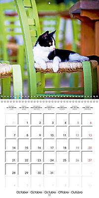 Cats in Greece (Wall Calendar 2019 300 × 300 mm Square) - Produktdetailbild 10