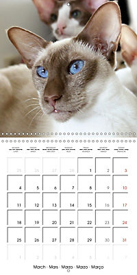 Cats - Siamese kitten with family (Wall Calendar 2019 300 × 300 mm Square) - Produktdetailbild 3