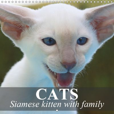 Cats - Siamese kitten with family (Wall Calendar 2019 300 × 300 mm Square), Elisabeth Stanzer
