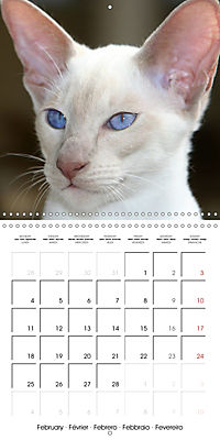 Cats - Siamese kitten with family (Wall Calendar 2019 300 × 300 mm Square) - Produktdetailbild 2