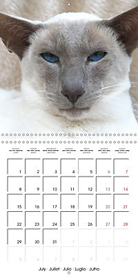 Cats - Siamese kitten with family (Wall Calendar 2019 300 × 300 mm Square) - Produktdetailbild 7