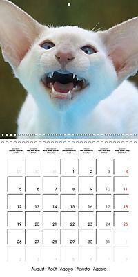 Cats - Siamese kitten with family (Wall Calendar 2019 300 × 300 mm Square) - Produktdetailbild 8