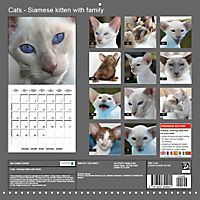 Cats - Siamese kitten with family (Wall Calendar 2019 300 × 300 mm Square) - Produktdetailbild 13