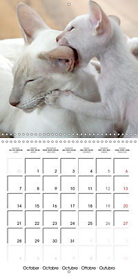 Cats - Siamese kitten with family (Wall Calendar 2019 300 × 300 mm Square) - Produktdetailbild 10