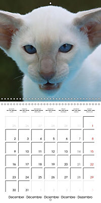 Cats - Siamese kitten with family (Wall Calendar 2019 300 × 300 mm Square) - Produktdetailbild 12