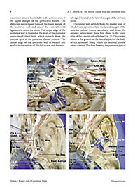 Cavernous Sinus - Produktdetailbild 9