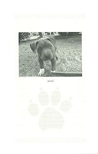 Cesar Millans Welpenschule - Produktdetailbild 1