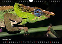 Chameleons Monsters of the African Bush (Wall Calendar 2019 DIN A4 Landscape) - Produktdetailbild 2