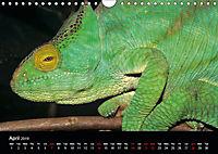 Chameleons Monsters of the African Bush (Wall Calendar 2019 DIN A4 Landscape) - Produktdetailbild 4