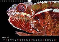 Chameleons Monsters of the African Bush (Wall Calendar 2019 DIN A4 Landscape) - Produktdetailbild 3
