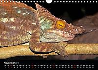 Chameleons Monsters of the African Bush (Wall Calendar 2019 DIN A4 Landscape) - Produktdetailbild 11