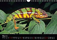 Chameleons Monsters of the African Bush (Wall Calendar 2019 DIN A4 Landscape) - Produktdetailbild 5