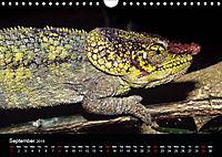 Chameleons Monsters of the African Bush (Wall Calendar 2019 DIN A4 Landscape) - Produktdetailbild 9