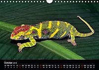 Chameleons Monsters of the African Bush (Wall Calendar 2019 DIN A4 Landscape) - Produktdetailbild 10
