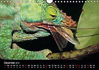 Chameleons Monsters of the African Bush (Wall Calendar 2019 DIN A4 Landscape) - Produktdetailbild 12