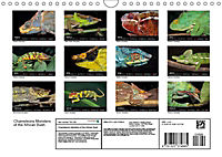 Chameleons Monsters of the African Bush (Wall Calendar 2019 DIN A4 Landscape) - Produktdetailbild 13