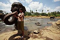 Chandani und ihr Elefant - Produktdetailbild 2