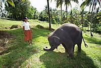 Chandani und ihr Elefant - Produktdetailbild 4