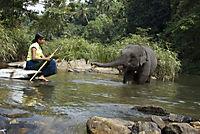 Chandani und ihr Elefant - Produktdetailbild 6
