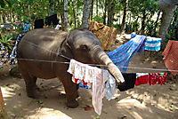 Chandani und ihr Elefant - Produktdetailbild 1
