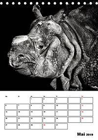 Charakterköpfe aus der Welt der Tiere (Tischkalender 2019 DIN A5 hoch) - Produktdetailbild 5
