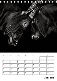 Charakterköpfe aus der Welt der Tiere (Tischkalender 2019 DIN A5 hoch) - Produktdetailbild 6